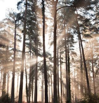 Forests our lifeline essay writer? University of california irvine mfa creative writing.