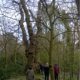 Visiting 'Old Knobbly' 22-04-15