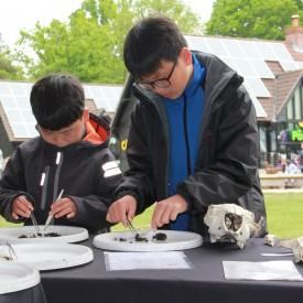 Wild Activities (25-05-15) Owl Pellet Dissection with NWT