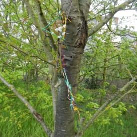 May 2015 - Tree Dressing Ceremony at Barnham Primary School